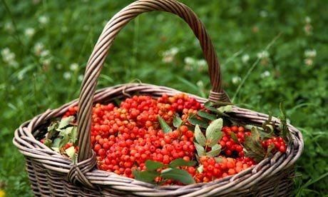 Rønnebærlikør